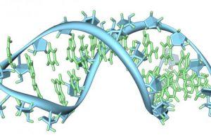 RNA Based Therapeutics Market